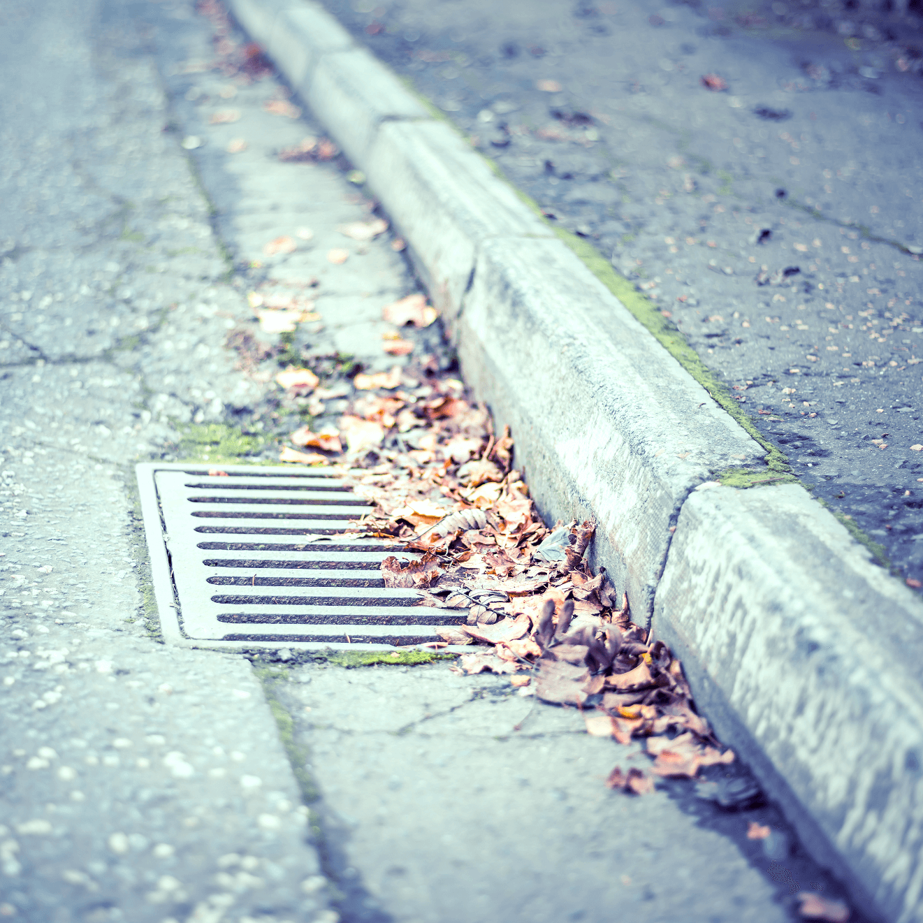 Close-up of drain covered in leaves